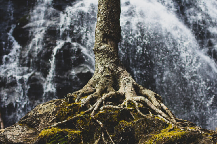 Grafted Branches – The Book of Romans, Part 35