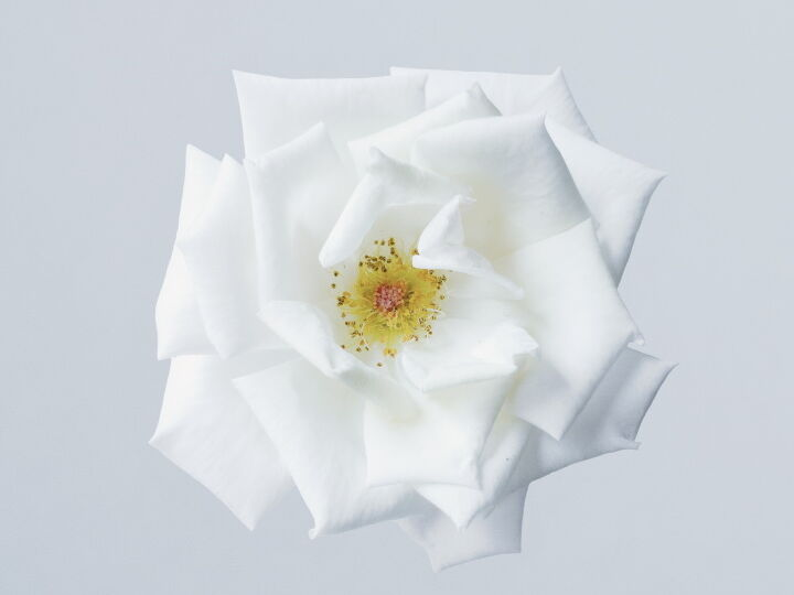 rose-rangraz-OO-p8TnDT34-sm