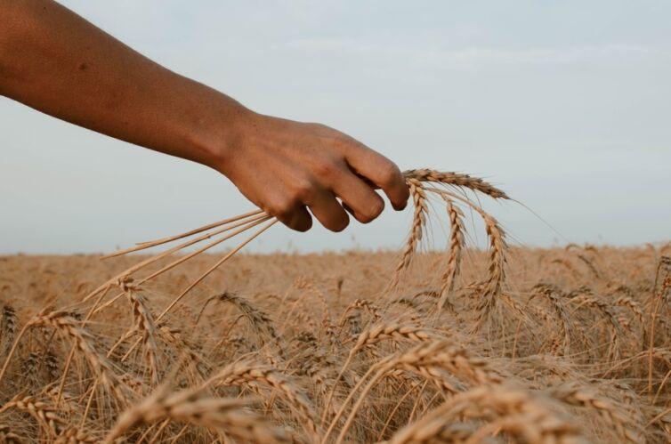 Mercy not Sacrifice – The Gospel of Matthew, Part 52